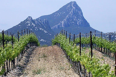 Grape Opportunities Wine UK Wine Supplier, Mas Peyrolle Wine, Wolf Mountain