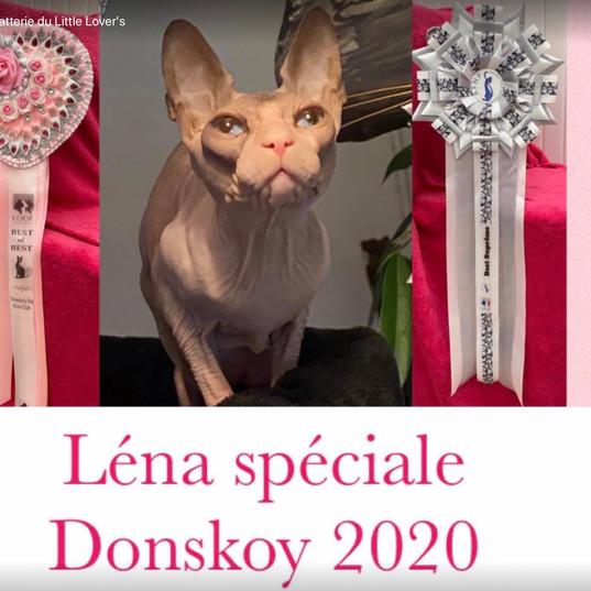 Lena à Béa donskoy plus beau chat de l'expo