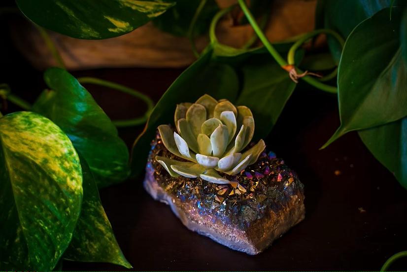 Rainbow Titanium Amethyst Succulent Crystal