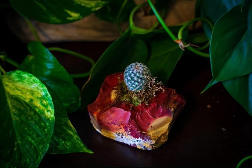 Mookaite Jasper Succulent Crystal