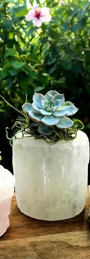 Rose Quartz, Selenite & Amethyst Succulent Crystals