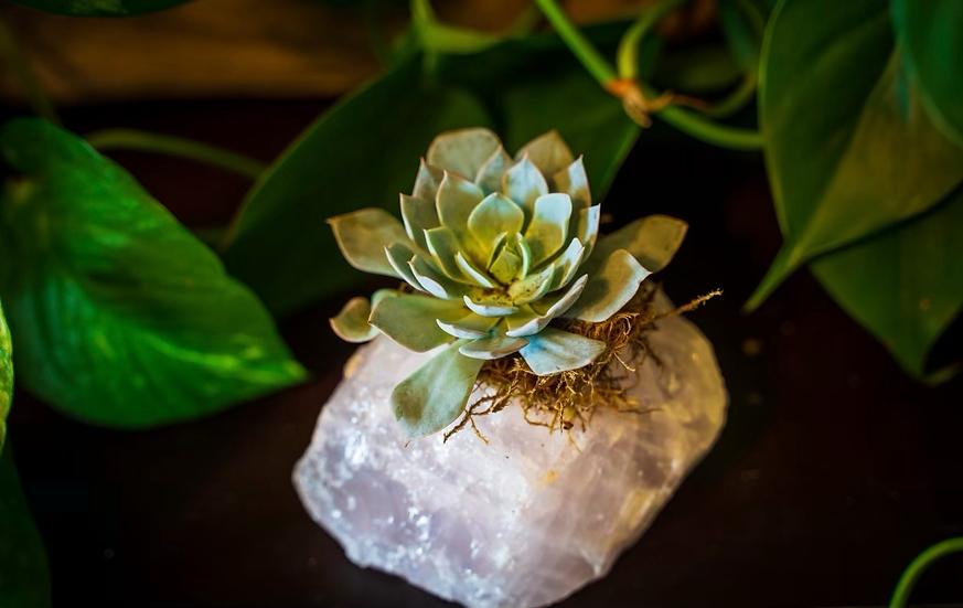 Rose Quartz Succulent Crystal