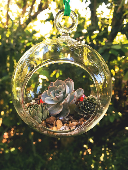 Succulent Ornament with Small Rocks