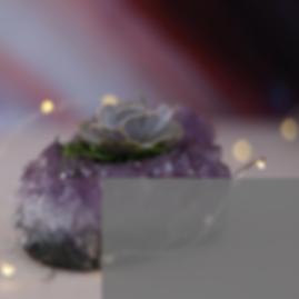 Shop succulent crystals.png