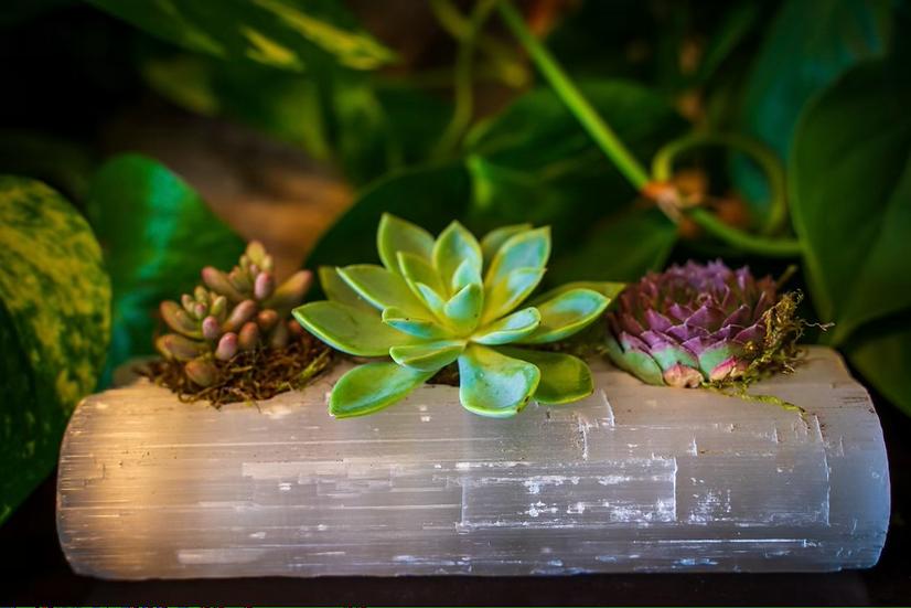 Selenite Log Succulent Crystal