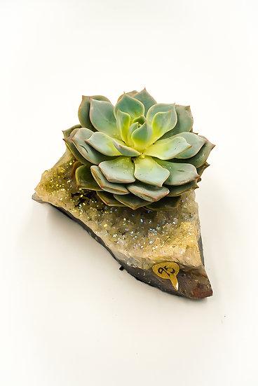 Shimmer Titanium Amethyst Succulent Crystal