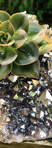 Echeveria & Platinum Titanium Crystal