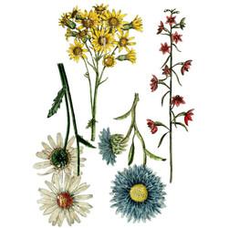 iod-decor-transfers-wild-flower-botanica