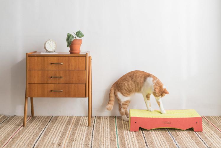BlackHole Rainbow Cat Scratcher-Bed Type, Orange Color