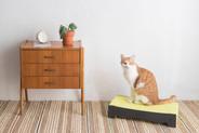 BlackHole Rainbow Cat Scratcher- Bed Type Black Color
