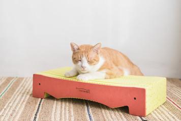 BlackHole Rainbow Cat Scratcher- Bed Type, Orange Color