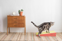 BlackHole Rainbow Cat Scratcher-Triangle Shape, Orange Color