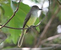 Aves de Uberlandia