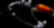 Uberlandia Birds