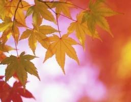 November Gratefulness