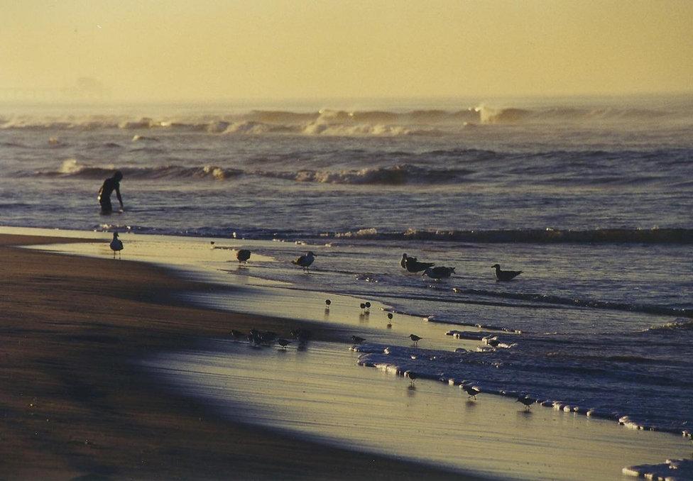socal beach afternoon birds-human 9-2020