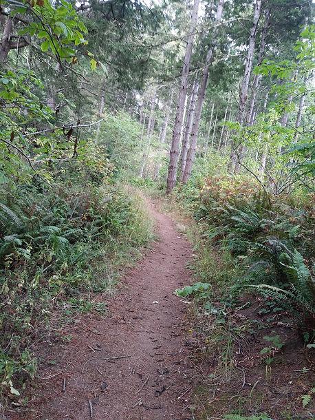 mid zone of upper trail - good.jpg