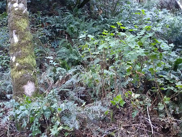 NatFitT_lush plants.jpg