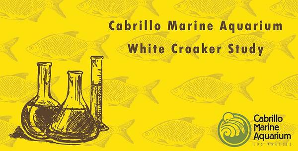 whitecroakerstudycaqua_Logo_470x260.jpg