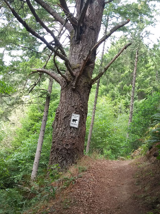 going up BF trail with bear sign -good.j