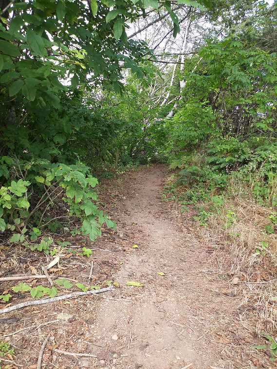 lower trail going up.jpg