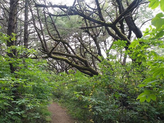 lower trail canopy in summer.jpg