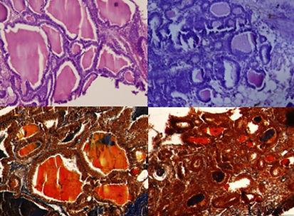 Thyroid Histophysiol-SF_Lee_2013_full.jp