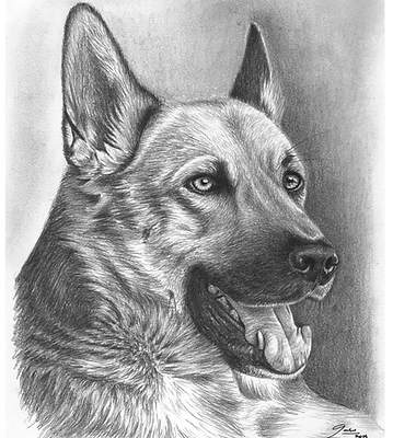 Gabriela Gaia Love Art drawing pet portrait