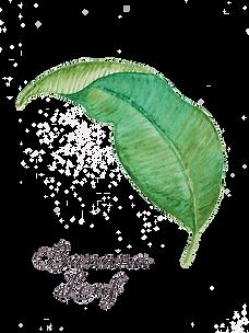 Hoja Banana Leaf 18x13 cm.png