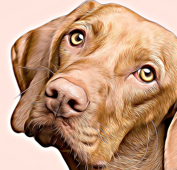 Retrato digital mascota-detalle- Gabriel