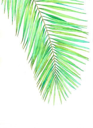 Hoja verde palmera acuarelas