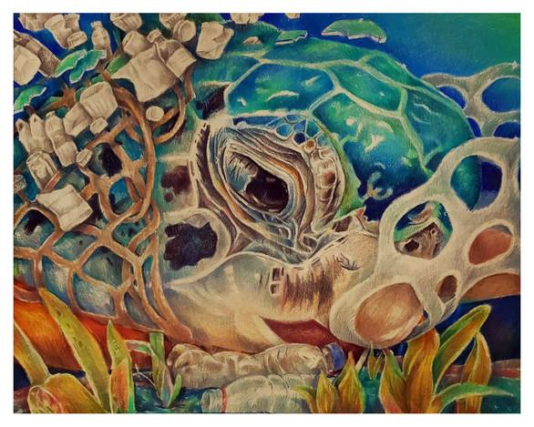 US33012::Mia Zhong::US::Sea Turtle's Future