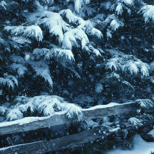 Trees with snow.png