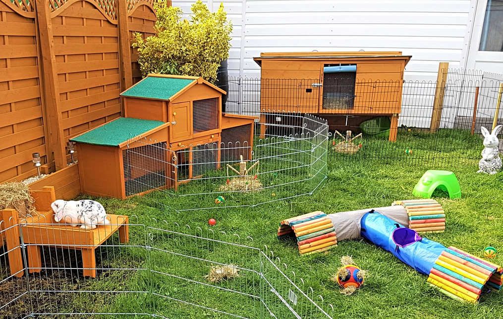 Rabbits outdoor play area.