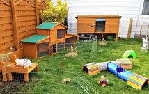 Rabbits outdoor play area.