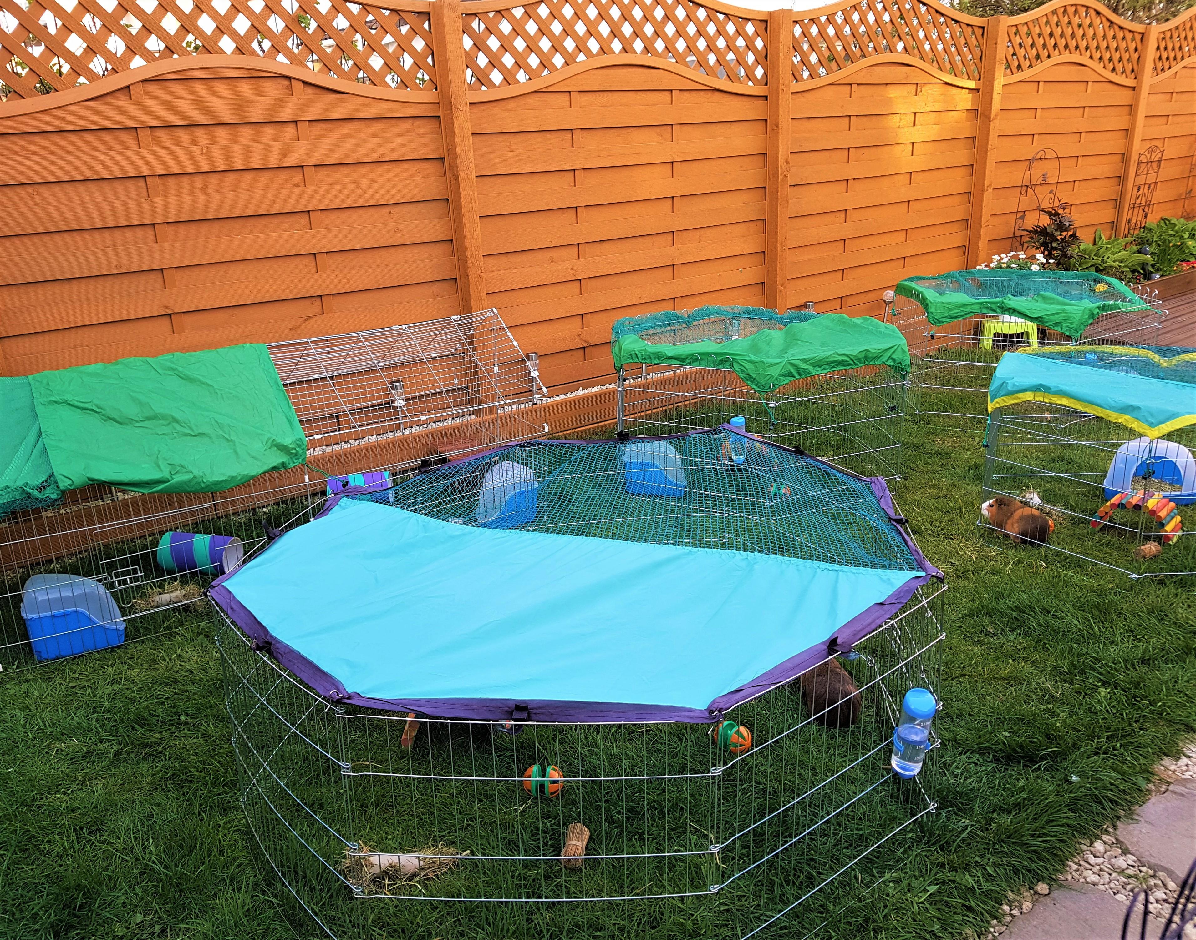 Outdoor guinea pig play pen area_