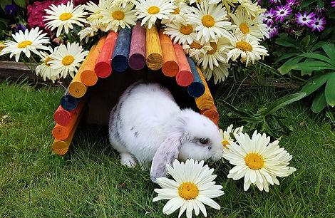 Rabbit Boarding - Kildare - Dublin