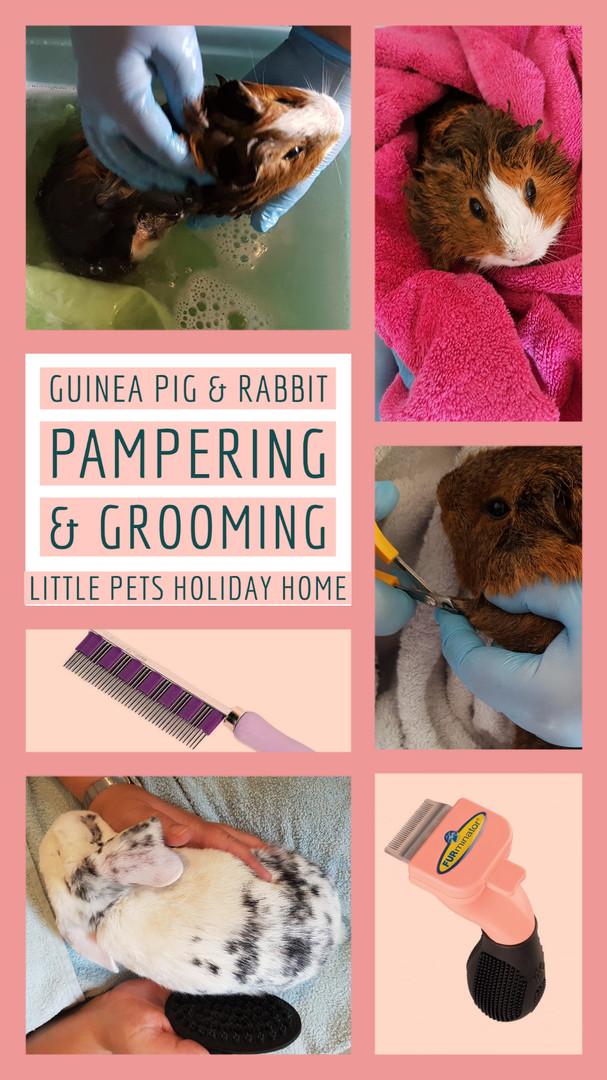 Guinea pig & Rabbit Pampering & Grooming