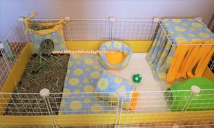 2x4 c&c cage Daisy print set up