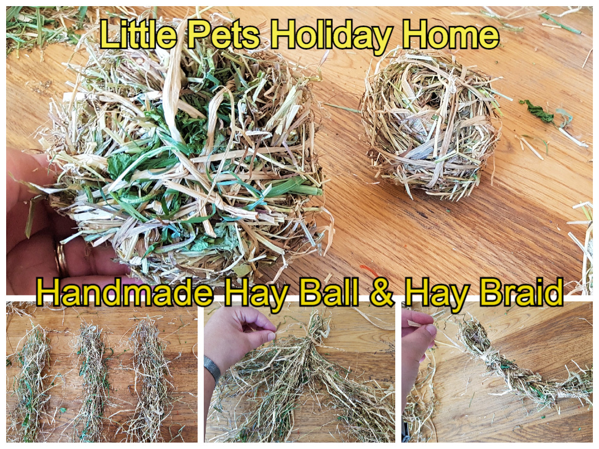 The main part of Rabbits and Guinea pigs diet should be at least 80% of hay to keep their digestive system working well and to also keep their teeth healthy. We are always encouraging them to eat hay and fresh grass. Providing enrichment activities for them based with hay, forage and fresh herbs/ vegetables and give them fruit treats once a week. We make our own hay balls, grass braids and rings, etc... for them to play with, toss around and eat.