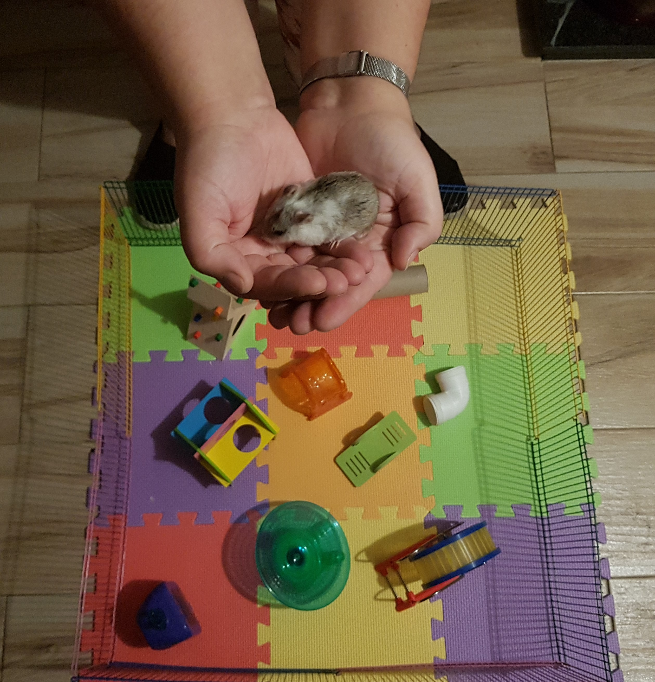 Sample of a hamster playground