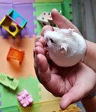 Hamster Boarding