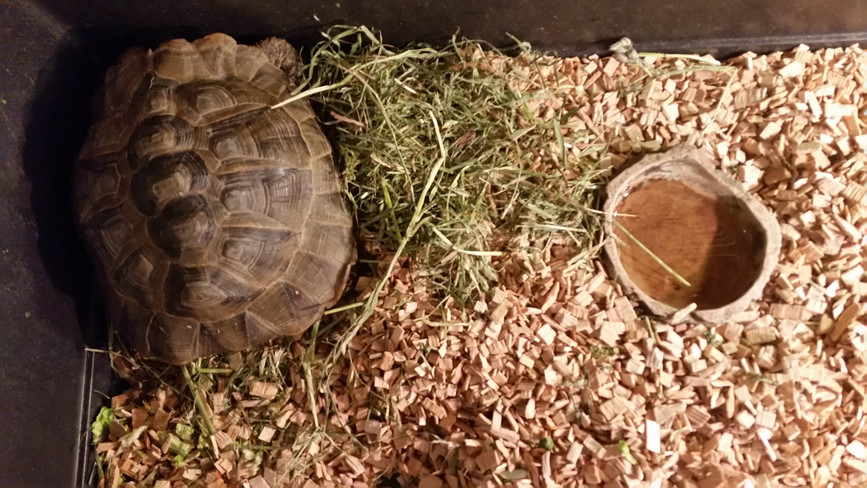 Picture of turtle owner's set up. We do have cages suitable for Turtules, but you need to bring your own heating lights equipment.