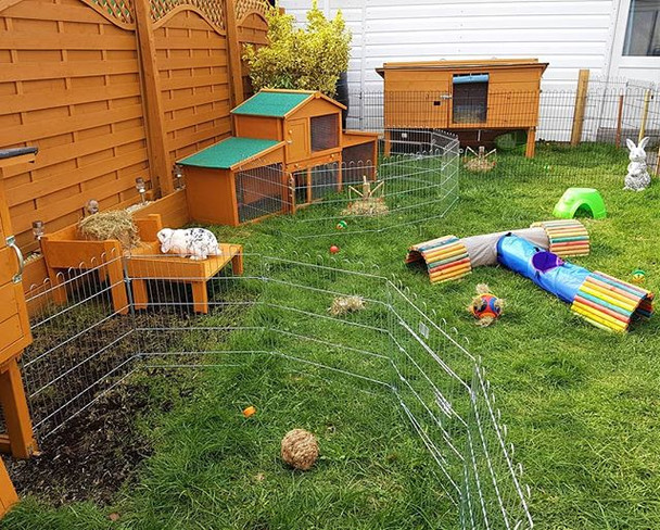 Rabbits fenced in outdoor area