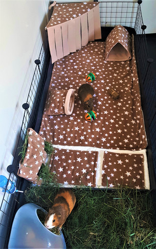 C&C cages available for Guinea pig boarding