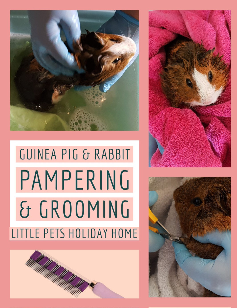 Pampering & Grooming service available for our Guinea pig & Rabbit guests.
