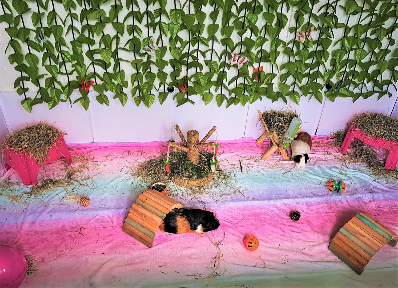 Guinea pigs indoor play area