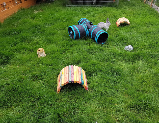 Rabbit fenced in play area