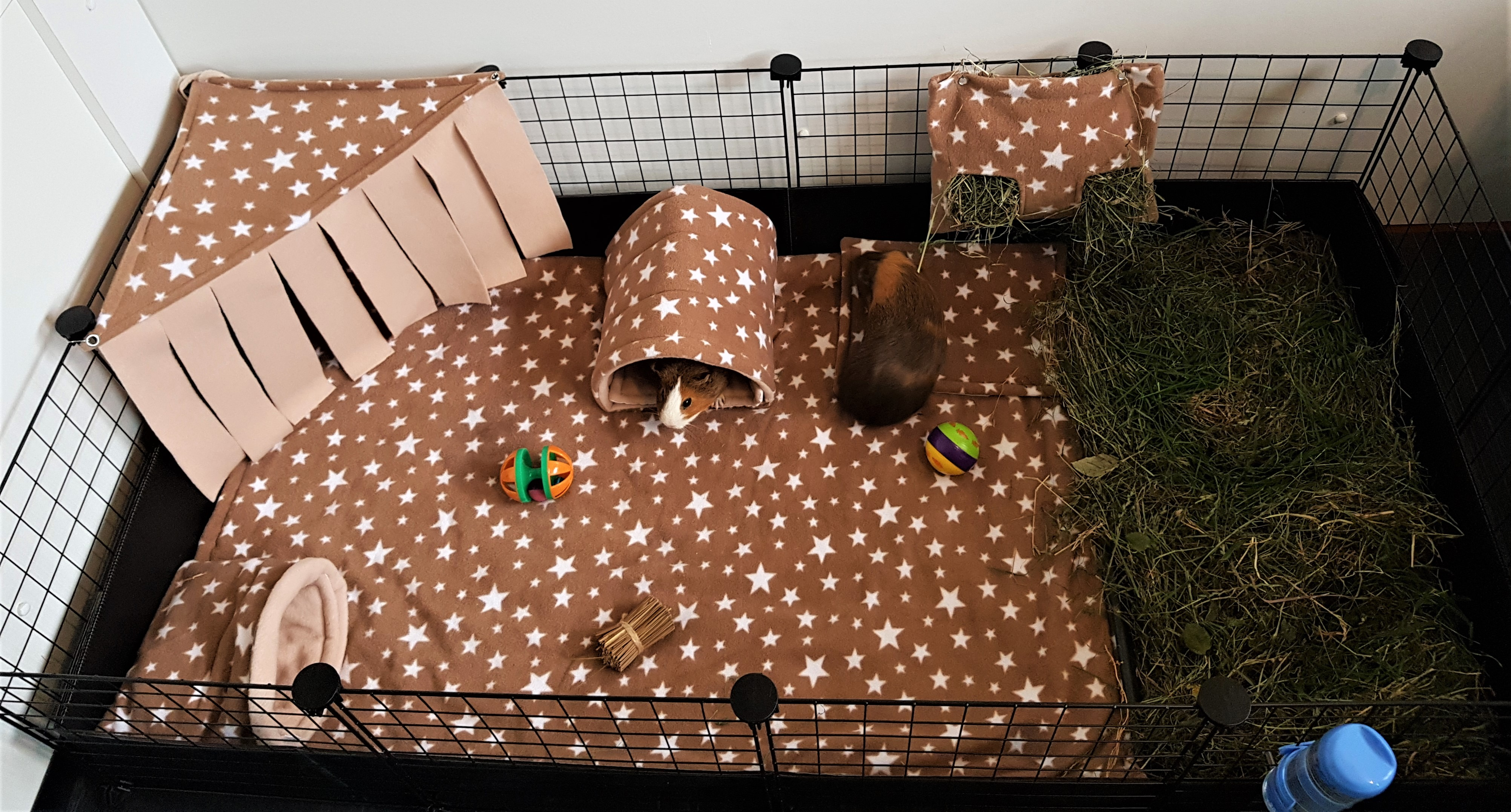 C&C cages for guinea pigs.