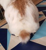 Pic. before grooming